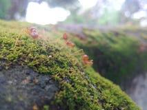 蚂蚁照片 免版税库存图片