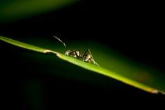 蚂蚁特写镜头 免版税库存照片