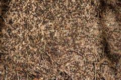 蚂蚁特写镜头在夏天森林里筑巢大蚂蚁小山 库存图片