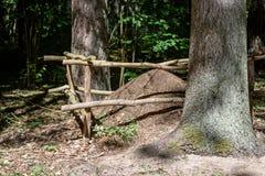 蚂蚁特写镜头在夏天森林里筑巢大蚂蚁小山 库存照片
