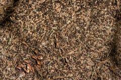 蚂蚁特写镜头在夏天森林里筑巢大蚂蚁小山 免版税库存照片