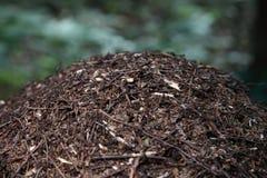 蚂蚁特写镜头筑巢在夏天森林蚁丘的大蚂蚁小山 免版税库存图片