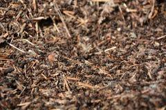 蚂蚁特写镜头视图 免版税图库摄影