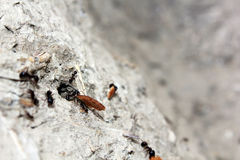 蚂蚁用面包 免版税库存照片