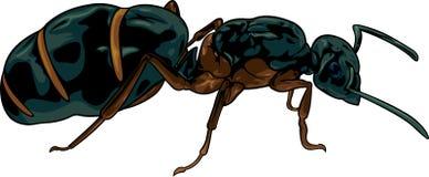 蚂蚁的动画片女王/王后 免版税库存图片