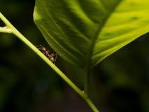 蚂蚁的和蚜虫属世界 库存图片