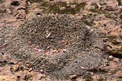 蚂蚁的嵌套 免版税库存照片