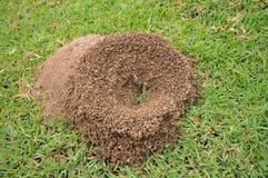 蚂蚁的巢 免版税库存照片