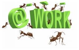 蚂蚁繁忙的执行的工作占用的工作 免版税库存图片