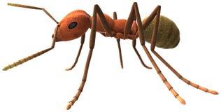 蚂蚁被隔绝的虫害例证 库存照片