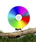 蚂蚁运载的cd 免版税图库摄影