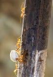 蚂蚁配合 图库摄影