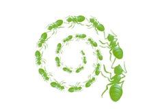 蚂蚁队列螺旋 免版税库存图片