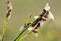 蚂蚁饲养 免版税图库摄影