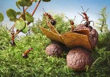 蚂蚁读了书 库存照片
