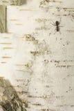蚂蚁-在白桦树皮1 库存照片