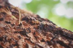 蚂蚁寻找食物 库存图片