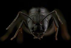 蚂蚁头  极其宏指令 库存照片