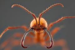 蚂蚁画象 免版税库存图片