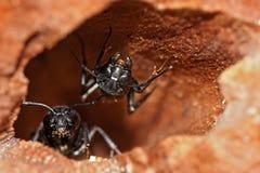 蚂蚁 免版税图库摄影
