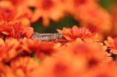 蚂蚱和花 免版税库存照片
