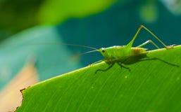 蚂蚱在阳光下 库存照片