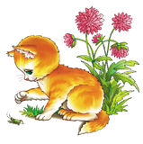蚂蚱小猫 免版税库存照片