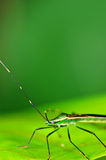 蚂蚱绿色叶子 库存照片