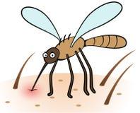 蚊子吮的血液 免版税库存图片