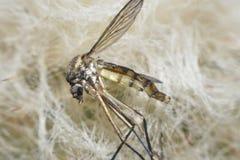 蚊子宏指令视图 免版税图库摄影