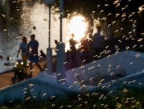 蚊子对家庭本机公园的群众攻击 免版税库存图片