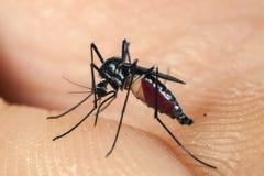 蚊子尖酸的人的皮肤 免版税库存图片