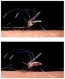 蚊子尖酸的人的皮肤 免版税图库摄影