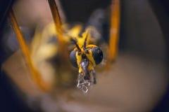 蚊子细节  免版税图库摄影