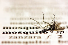 蚊子 免版税图库摄影