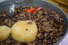 蚕土豆和辣椒汤 免版税库存图片