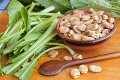 蚕豆和苦苣生茯 免版税库存图片