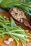 蚕豆和苦苣生茯 库存照片