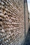 蚝壳墙壁 免版税库存图片