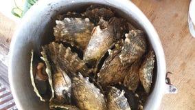 蚝壳煮沸了纤巧 库存图片