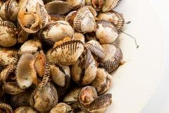 蚝壳用黄油大蒜香料 免版税库存图片