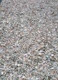 蚝壳,被击碎的蚝壳, 免版税库存图片