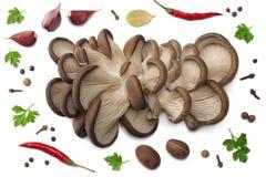 蚝蘑、在白色背景和香料隔绝的荷兰芹、大蒜 顶视图 免版税库存图片