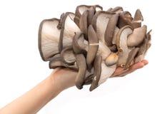 蚝蘑在白色背景的一只手上 免版税图库摄影