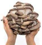 蚝蘑在白色背景的一只手上 免版税库存图片