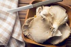 蚝蘑 免版税库存图片