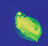 水蚤,一小浮游生物甲壳动物 库存照片