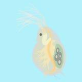 水蚤-小浮游生物的动物 免版税库存照片