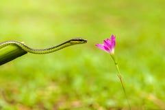 蛇和野花 免版税库存照片