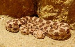 蛇在伊拉克利翁希腊 库存图片